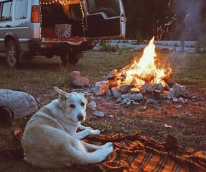 dog, camp, and fire image