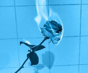 aesthetic, Bleu, and rose image