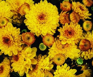 flowers and yellow image