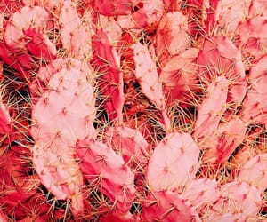 cactus, pink, and coral image