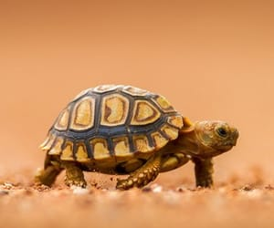 animal, turtle, and wild image