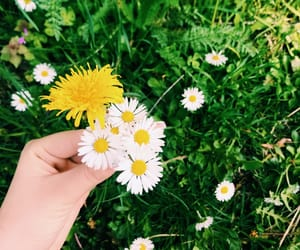 beautiful, girl, and grass image