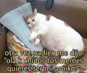 cats, frases, and memes image