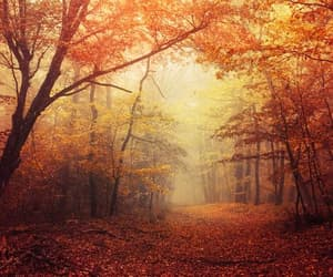 etsy, nature photography, and autumn forest image