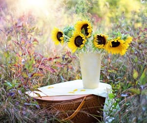flowers, white flowers, and yellow flowers image