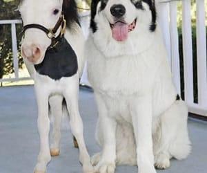 animal, dog, and horse image