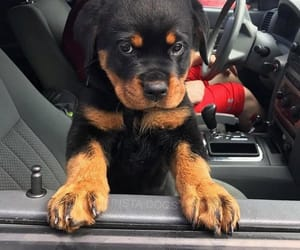 dog, cutedog, and doggies image