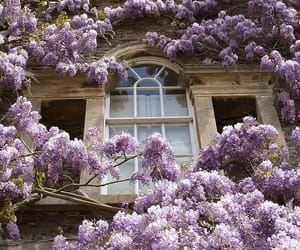flowers, house, and window image