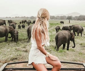 animal, elephant, and travel image