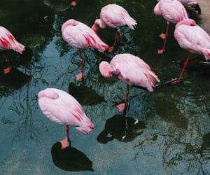 animal, bird, and flamingo image