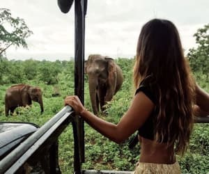 animals, photography, and wildlife image