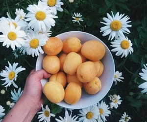 flowers, health, and fruit image