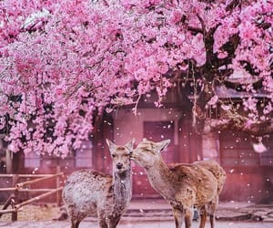 animal, pink, and japan image