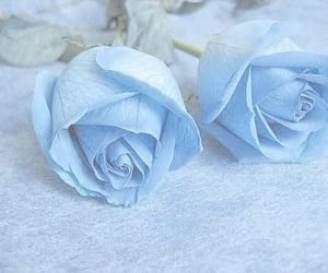 blue, rose, and aesthetic image