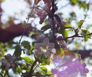 cherry blossom, nature, and summer image