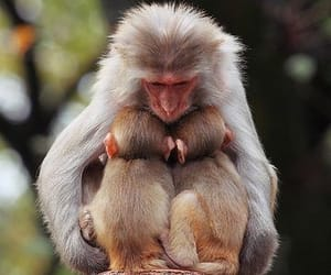 apes and monkeys image