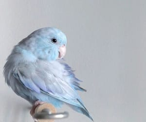 bird, animals, and blue image
