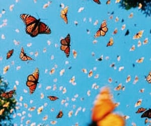 butterflies, background, and beautiful image