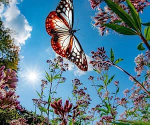 butterfly, flowers, and mariposa image