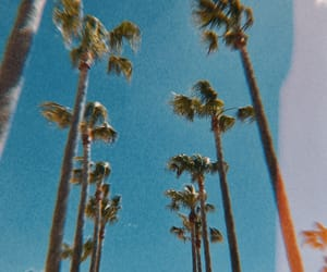 california, landscape, and palm trees image