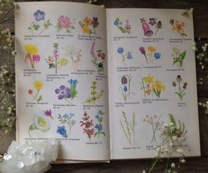 art, book, and botanical image