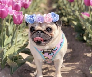 animal, cutie, and flowers image