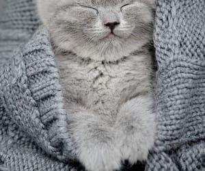 animal, cutie, and cat image