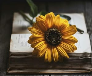 books, أزهار, and flowers image