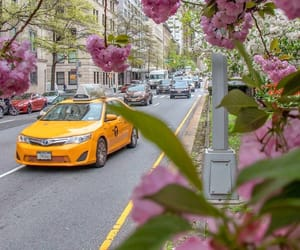 blooming, colors, and new york city image