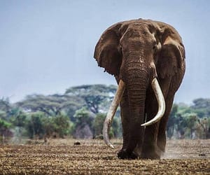 animal, elefante, and naturaleza image