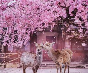 animal, pink, and spring image