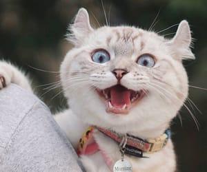 animal, gato, and 새끼 고양이 image