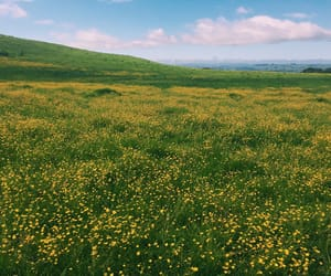 field, flowers, and hike image