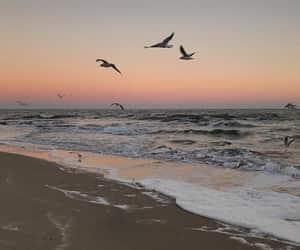 sea, bird, and ocean image