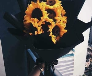 sunflower, black, and flowers image