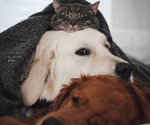 cat, animals, and dog image