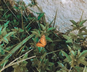 butterfly, inspiration, and nature image