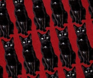 cat, black, and caos image