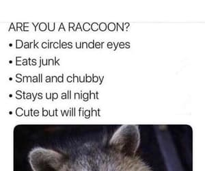 funny, memes, and raccoon image