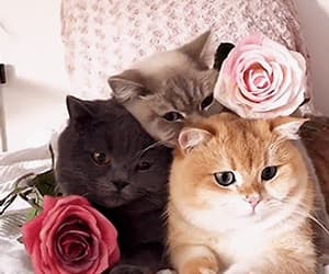 blogger, kittens, and pink image