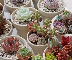green and succulent image