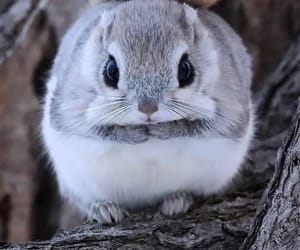 animal, cutie, and wild image