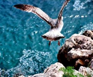 bird, ocean, and animal image