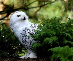 animal, beautiful, and owl image