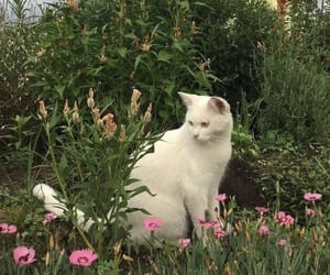 aesthetic, cat, and flowers image