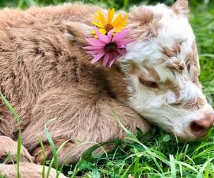 flowers, animal, and cow image