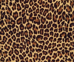 leopard print and pattern image