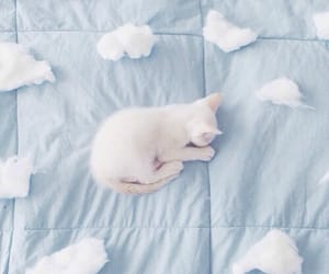 Abba, music, and sleep image