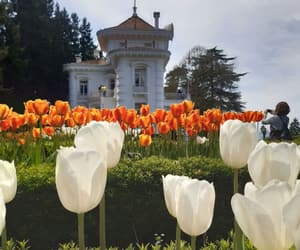 flowers, orange, and purebeauty image