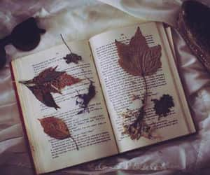hojas, inspiracion, and otoño image